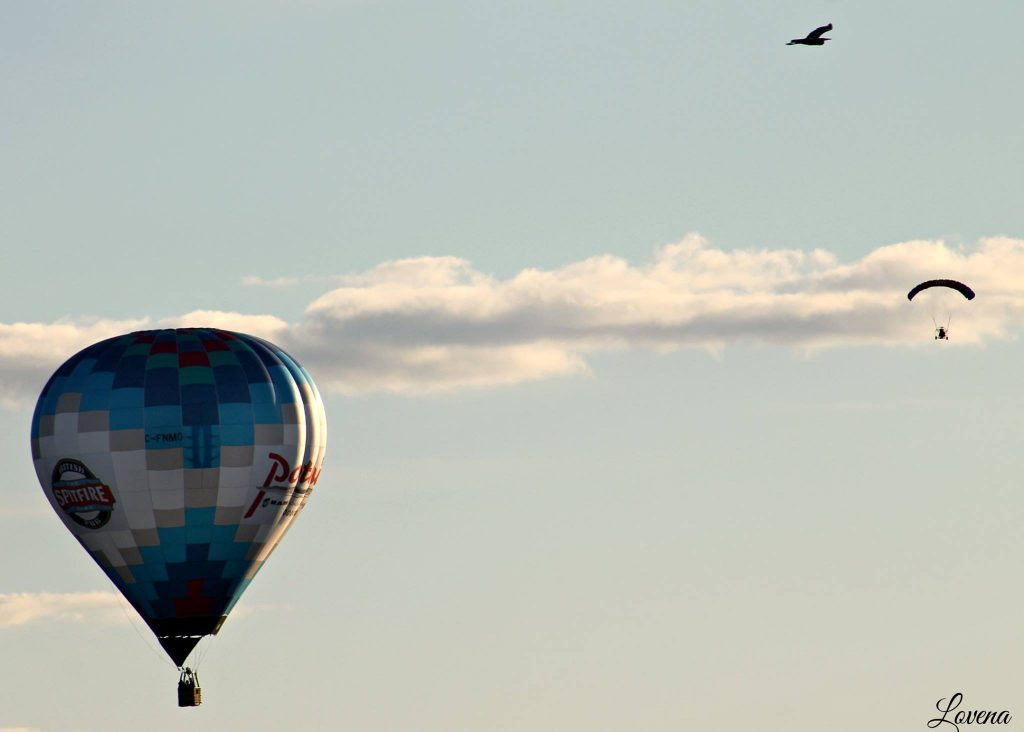 Balloon, Bird and PowerChute